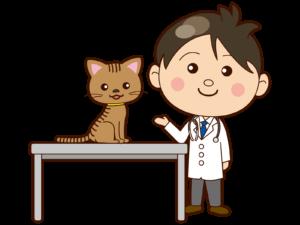 診察台にのるネコ