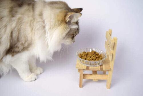 キャットフードを食べるネコ