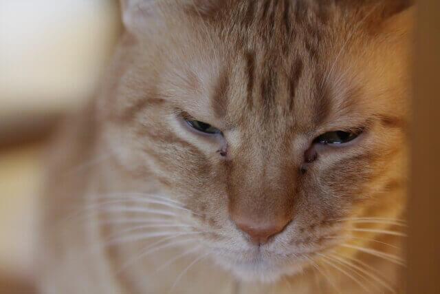 酸っぱくない?と考えるネコ
