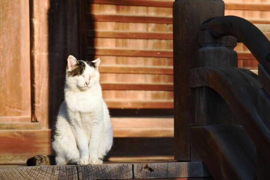 ネコとお寺