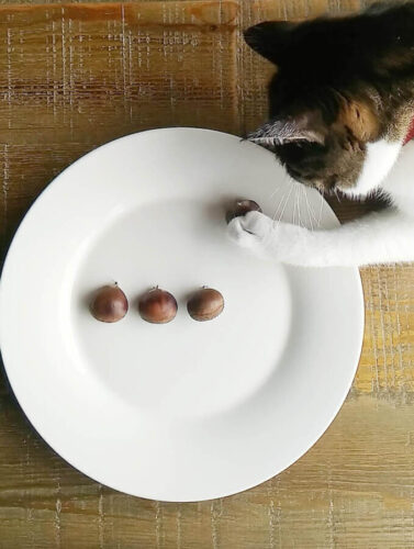 ネコの味覚は本当は三つだった