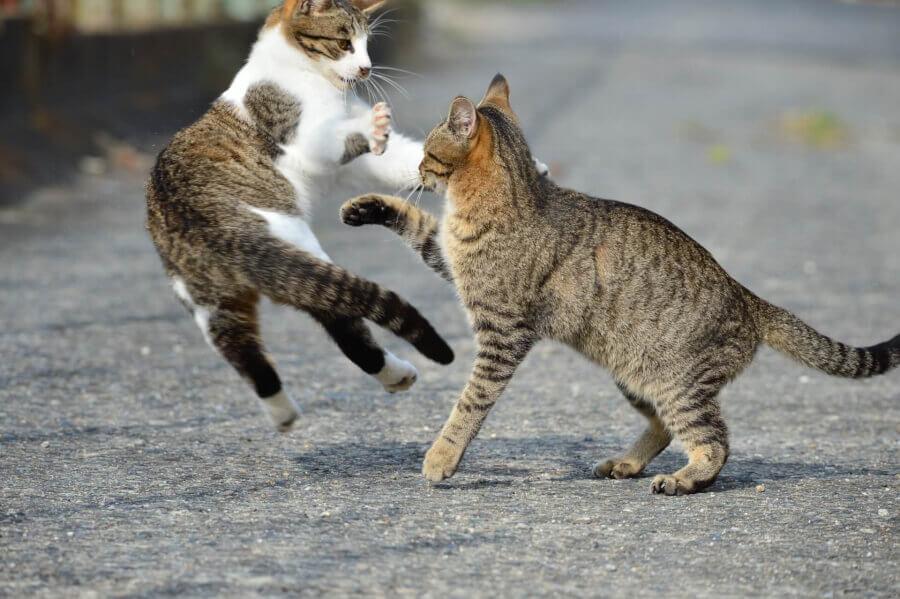 ネコの殺傷能力