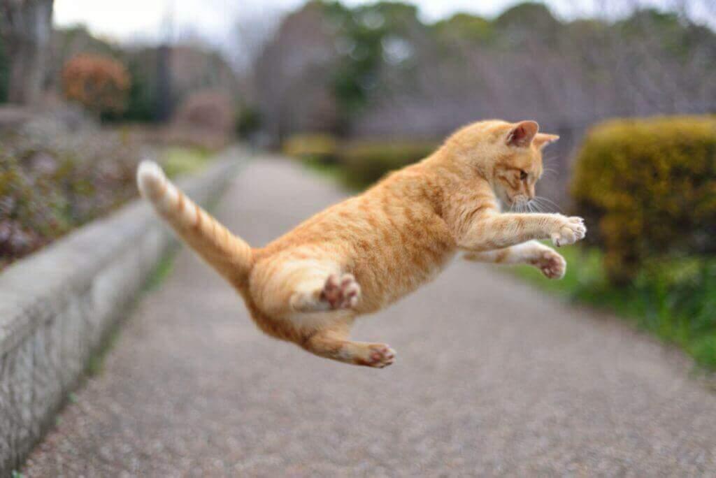 ネコのジャンプ