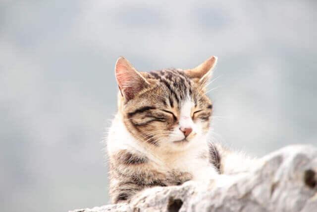 子猫を救う