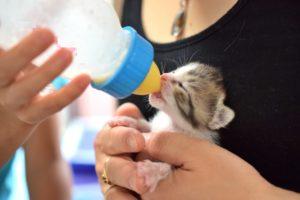 子猫にミルクを与える女性