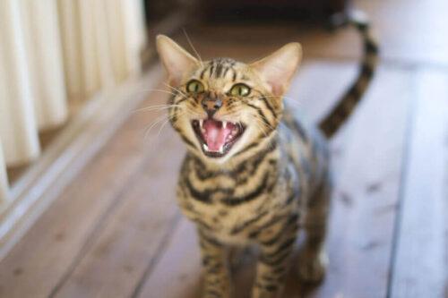 窓際で外に出たいと鳴くネコ