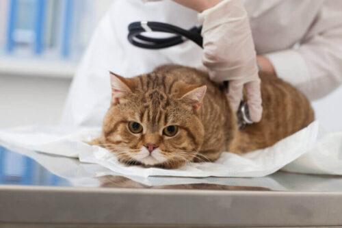 ネコの健康診断