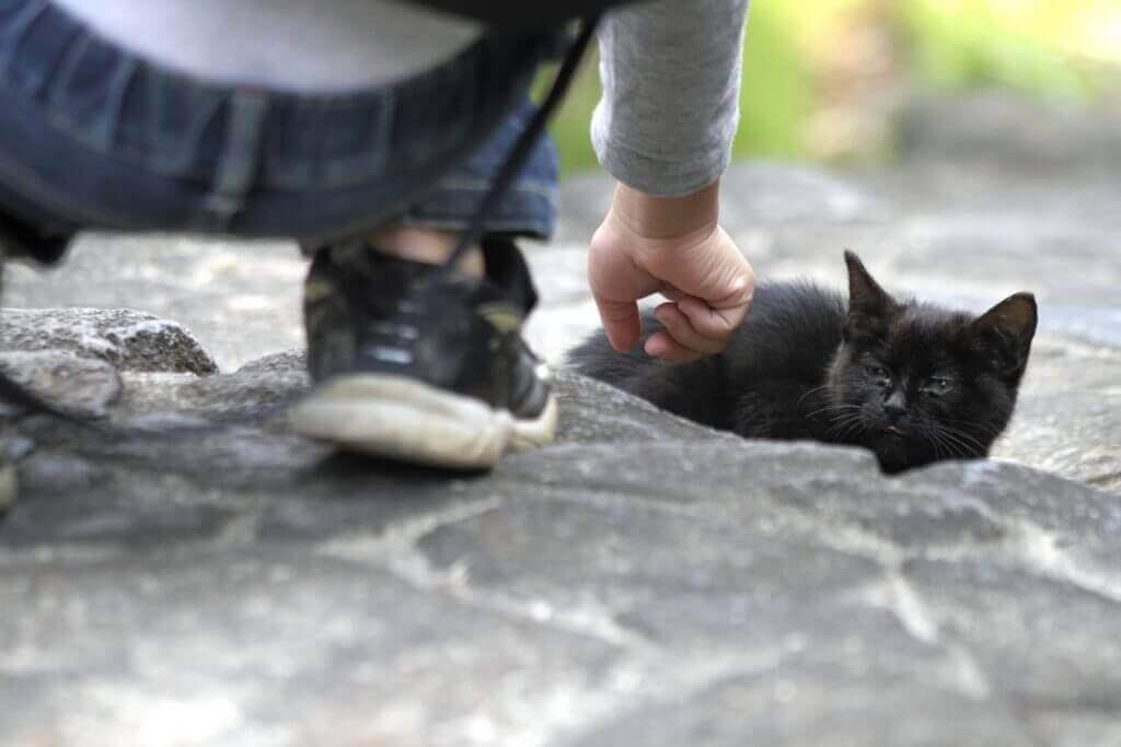 ネコをなでる