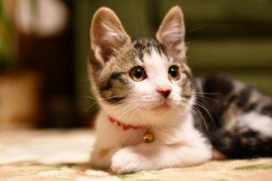 放っておくと危険!愛猫を襲うマダニ媒介感染症の対処法とは