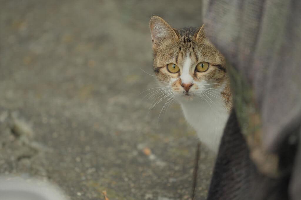 目線を合わせる野良猫