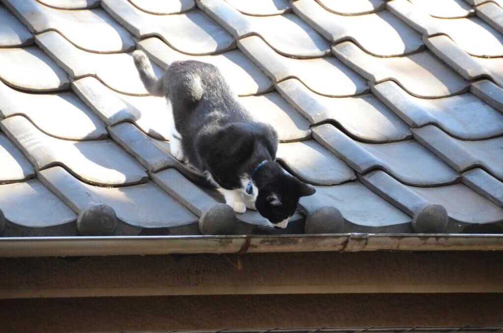 飛ぶよ、飛ぶよ後ろ推さないでよと言わんばかりのネコ