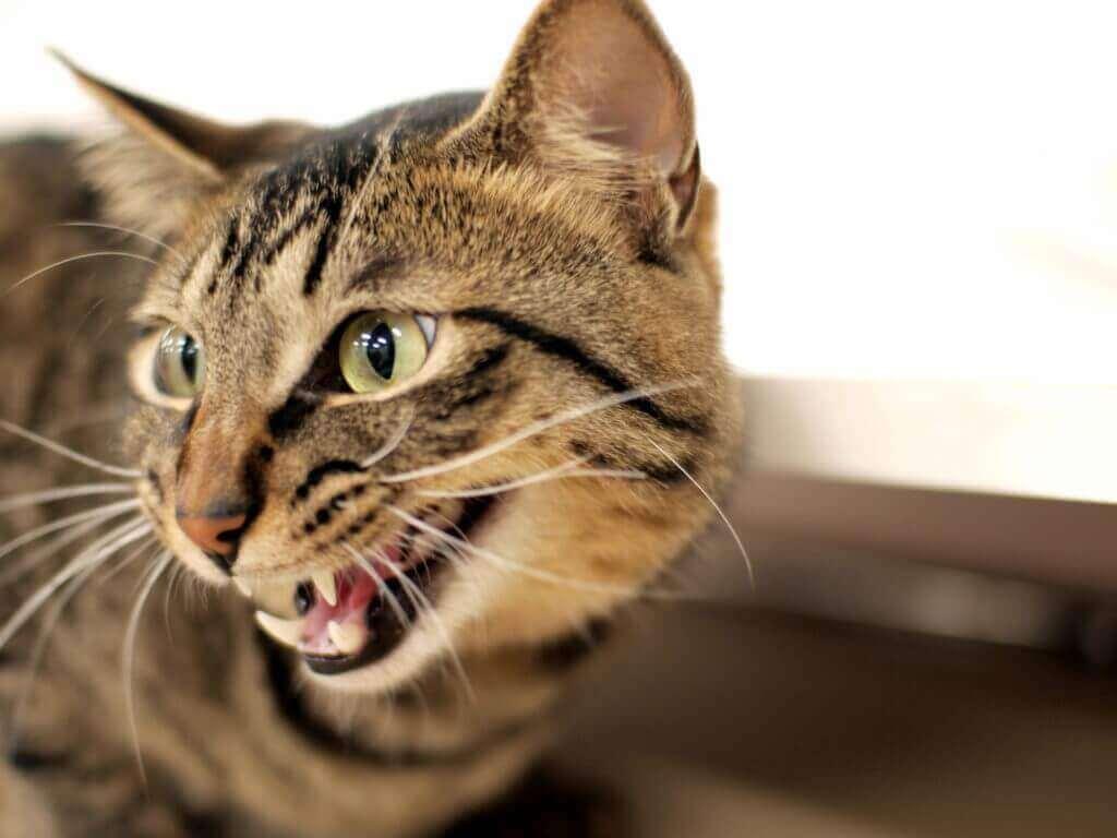 低い声で鳴くネコ