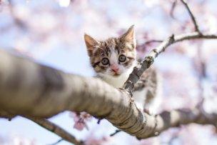 木登りした子猫