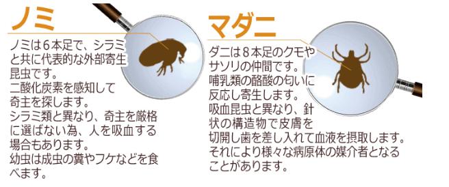 ノミとダニの違い「マダニはクモの仲間」